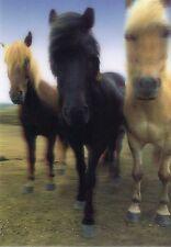 3 -D - Ansichtskarte: drei Island Pferde - three Iceland Horses - sehr hübsch!