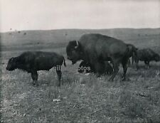 Ph. Paul Coze - USA c. 1940-50 - Indiens Bisons - DIV 3117