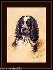 English Print English Springer Spaniel Dog Art Picture