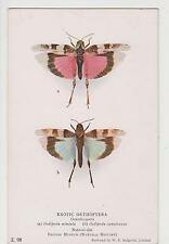 PC  British museum, Natural history. Exotic  Orthoptera (Moth butterfly ) c 1910