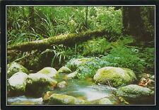 CREEK & FALLEN TREE in RAINFOREST BORDER RANGES NATIONAL PARK POSTCARD - NSW PC