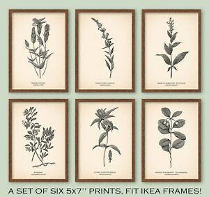 5x7'' VINTAGE STYLE PRINTS Botanical Poster Neutral Home Beige FIT IKEA FRAMES