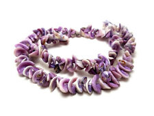 Periwinkle Lily Shell Beads  (16 Inches Strand)