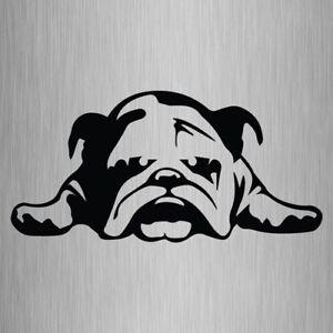 Bulldog Sticker Dog Vinyl Car Window Decal 205mm x 100mm #2