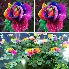 Nouveau 500Pcs Colorful Rainbow Rose Graines de FLEURS ODORANTES Home Yard Garden Decor