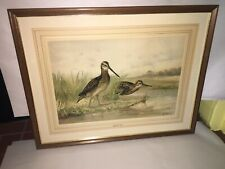 Antique Alexander Pope Jr Chromolithograph of A English Snipe Ca. 1890's 1900