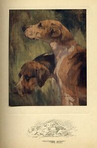 FOXHOUNDS SHOWING ROUNDED AND UNROUNDED EARS 1909 ANTIQUE COLOR PRINT DOGS