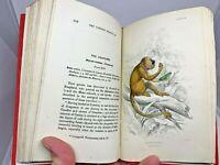 Jardine 29 Hand Colored Plates Engraved 1888 Monkeys