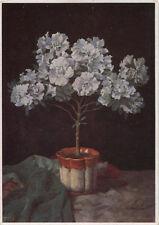 Alte Kunstpostkarte - W.H. Wendlberger  - Weiße Azaleen