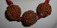 4-5-6-Mukhi Rudraksha Beads, Genuine Matured Blessed by Priest w/ Sandalwood Oil