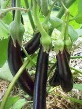 100 LONG PURPLE EGGPLANT SEEDS NON-GMO Heirloom Vegetable Viable seed Gardening