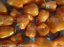 Habanero orange ** Chili ** Chilli   ultrascharf  10 frische Samen Balkon Kübel