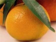 Graines d'orange,les herbes,produits de mon jardin,orange biologique