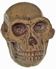 Rare Prehistoric Dinosaur Mammal Australopithecus Ape Replica Skull Pvc Figure