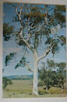 Greetings from Gisborne Victoria Australia Vintage Collectable Postcard.