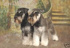 Miniature Schnauzer Get Well Soon Card - Starprint No 1