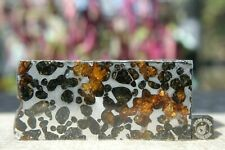 Sericho Pallasite Meteorite from Kenya Africa Habaswein 429.1g partial cut