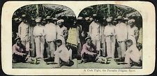 PHILIPPINES A COCK FIGHT THE FAVORITE FILIPINO SPORT STEREOVIEW