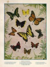 """1930 Color Print """"American Butterflies"""" 10 Gorgeous Species Lepidoptera Insect"""