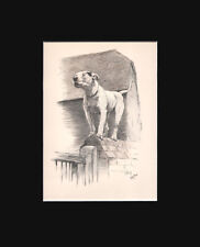 """Vintage Bull Terrier Dog Print 1930 by Cecil Aldin 9x12"""" Crackers On The Wall"""