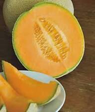CANTALOUPE SEED, HALES BEST JUMBO, HEIRLOOM, ORGANIC, NON GMO, 100 SEEDS, MELON