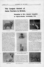 OLD CAIRN TERRIER OUR DOGS 1913 DOG BREED KENNEL ADVERT PRINT PAGE b181