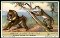 Mandrill Monkey Ape Primate 60+ Year Old Trade Ad Card