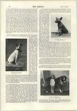 1897 cane con un occhio di vetro Cape CACCIA Cucciolo Miss Mabel Hemming