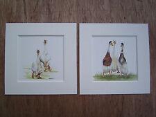Watercolour Duck, Runner Ducks, Prints  (NEW- BIGGER) x 2, in mounts