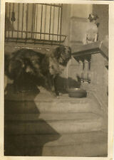 PHOTO ANCIENNE - VINTAGE SNAPSHOT - CHIEN OMBRE DRÔLE - DOG SHADOW FUNNY
