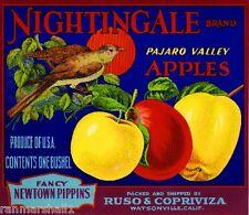 Watsonville California Nightingale Bird Apple Fruit Crate Label Art Print