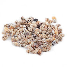 100x New Small Bulk Natural Sea Beach Shell Conch Seashells For DIY Crafts Decor