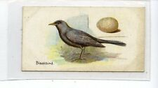 (Jc5283-100)  LAMBERT & BUTLER,BIRDS & EGGS,BLACKBIRD,1906,#35