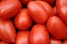Organic Roma Tomato Small Seed 20ct Excellent flavor USA Produced