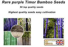 Rare Purple Bamboo, Timor Bambusa seeds - 50 quality Viable Seeds -  UK SELLER