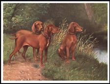Hungarian Vizsla Group Of Dogs Lovely Vintage Style Image On Dog Print Poster