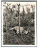 Tchad, Elan de Derby  Vintage silver print. Série de photos avec le sujet d&#039