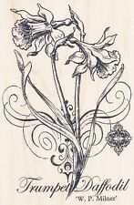Botanical Daffodil Flowers P152 ~ NEW ~ Stampendous RUBBER STAMP ~ Free Shipping