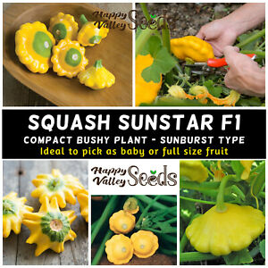 Squash SUNSTAR F1 7 Seeds vegetable garden COMPACT EASY GROW spring summer plant