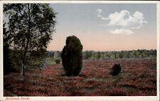 LÜNEBURG Lüneburger Heide AK um 1940 blühende Heide Strauch Botanik Pflanzen