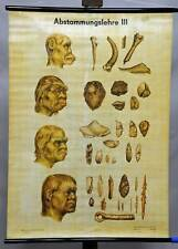 old historical pull-down wall chart, biology, theory of evolution 3, ancestors