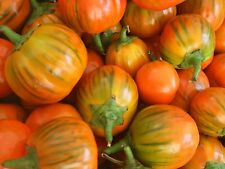 Eggplant Seeds 50 Seeds Turkish Eggplant Orange Vegetable Seeds