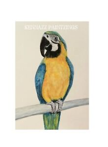 Macaw Parrot Original 1 Of Painting By Kenna Watercolour A5  Unframed Art