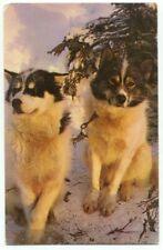 Alaskan Husky Sled Dogs Postcard - Alaska