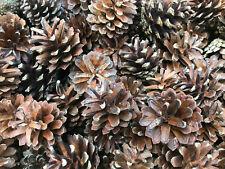 100 + Premium Quality Natural Fir Pine Cones 4-6cm Christmas Decorations, Crafts