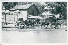 Horse Drawn Freight Wagon Remember When Original News Service Photo