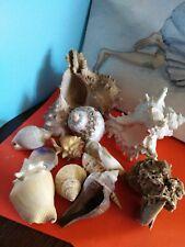 Lot de coquillage divers et rose des sables