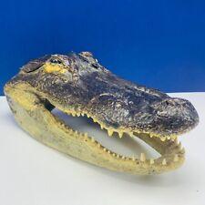 Alligator head taxidermy crocodile decor reptile sculpture bust art mantle vtg