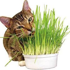 400 Samen  Hund Hafer Katzengras Antioxidant Haustiere Health Food Weizen-Samen