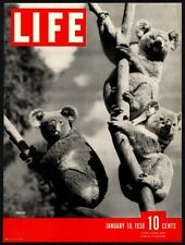 1938 Cute Koala Cubs - Australia - Original Vintage Life Magazine *Cover Only*